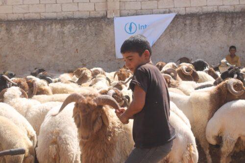Qurbani in Syria, September 2016